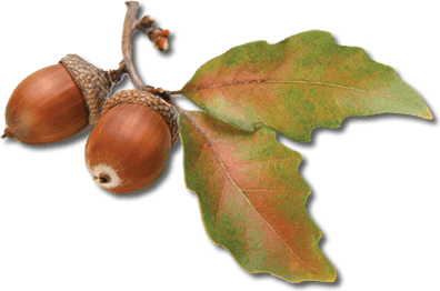 download acorn free png photo images and clipart | freepngimg