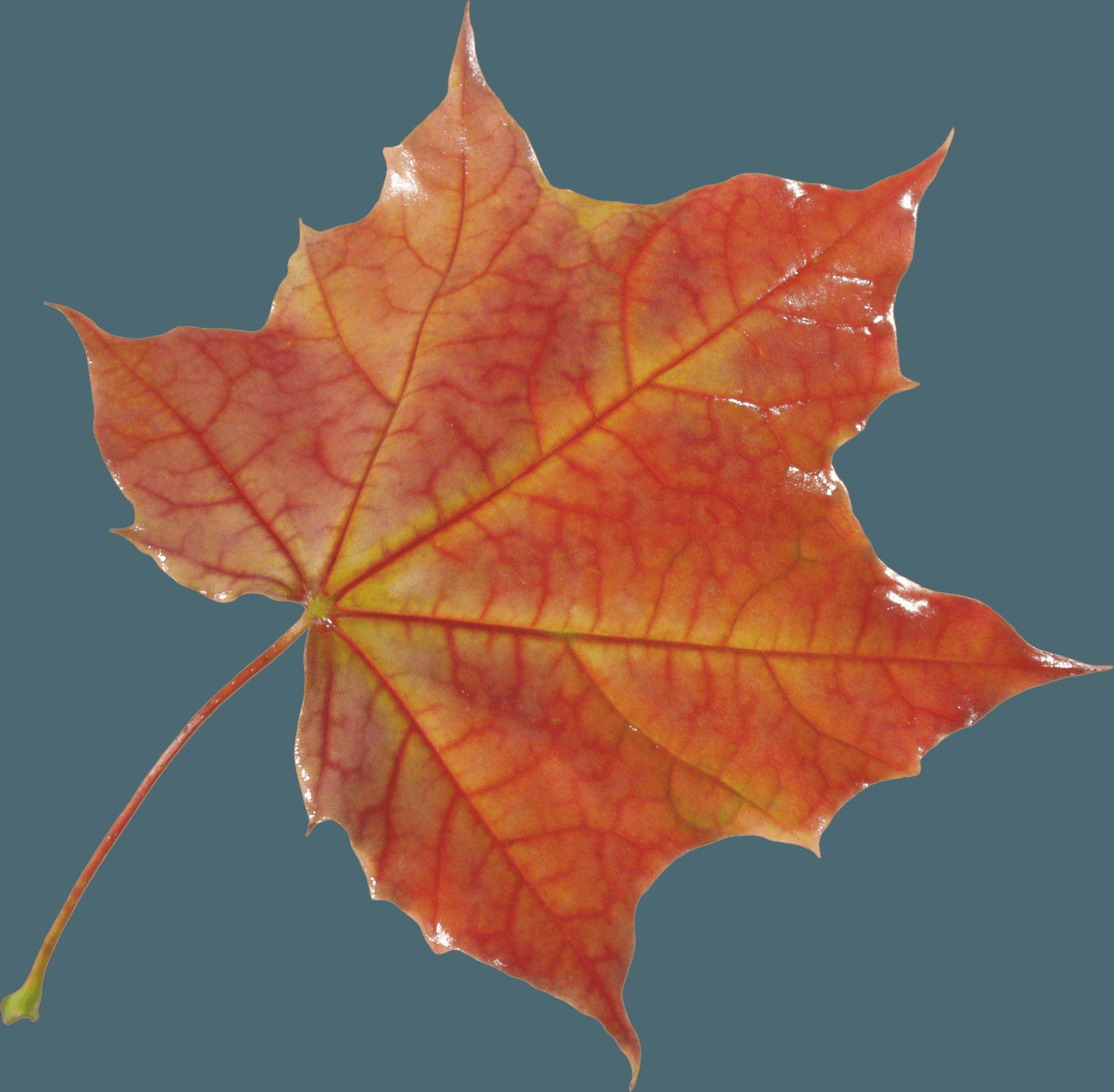 Download Autumn Png Leaf HQ PNG Image   FreePNGImg