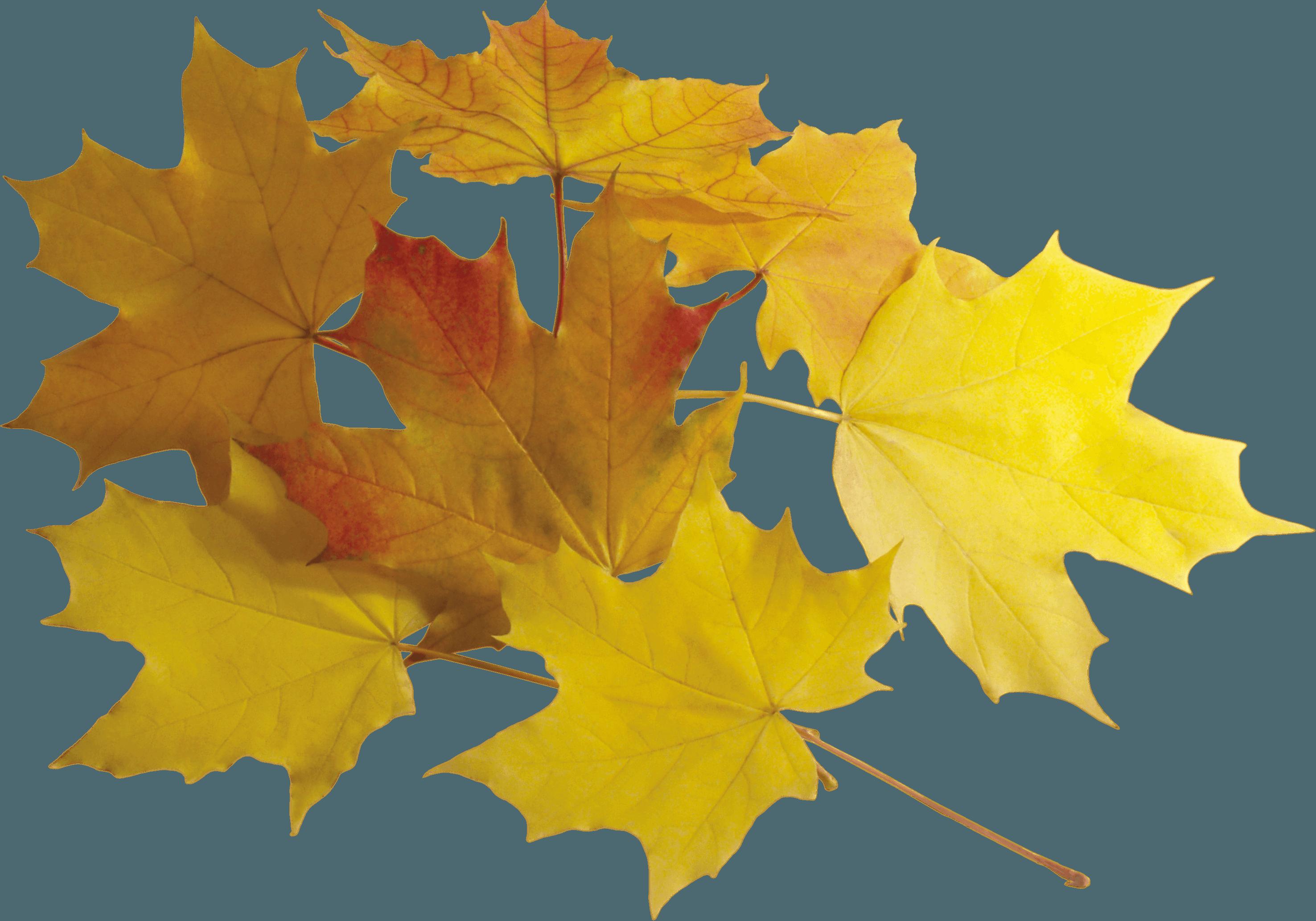 Download Autumn Png Leaves HQ PNG Image   FreePNGImg