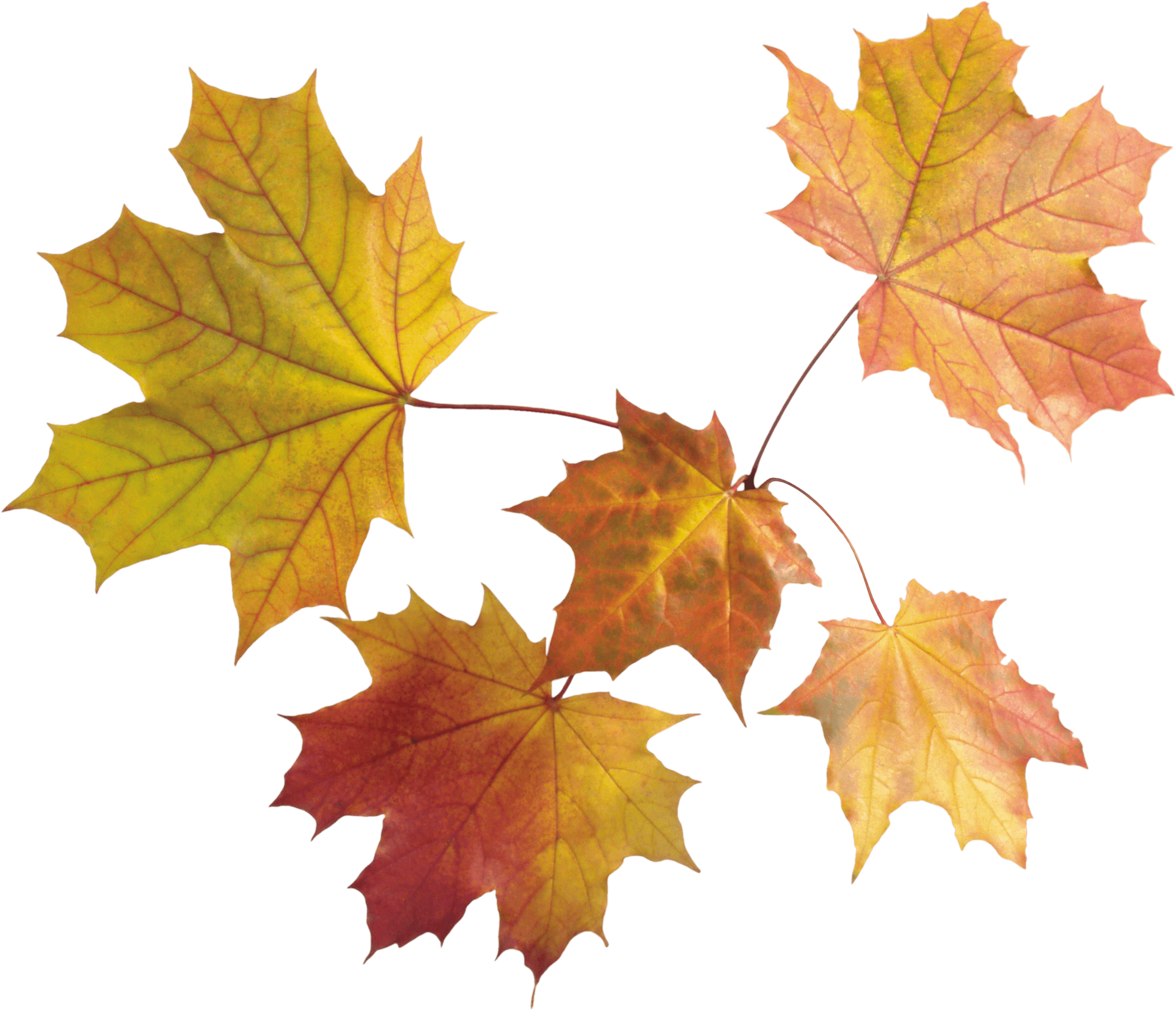 Autumn Png Leaves PNG Image