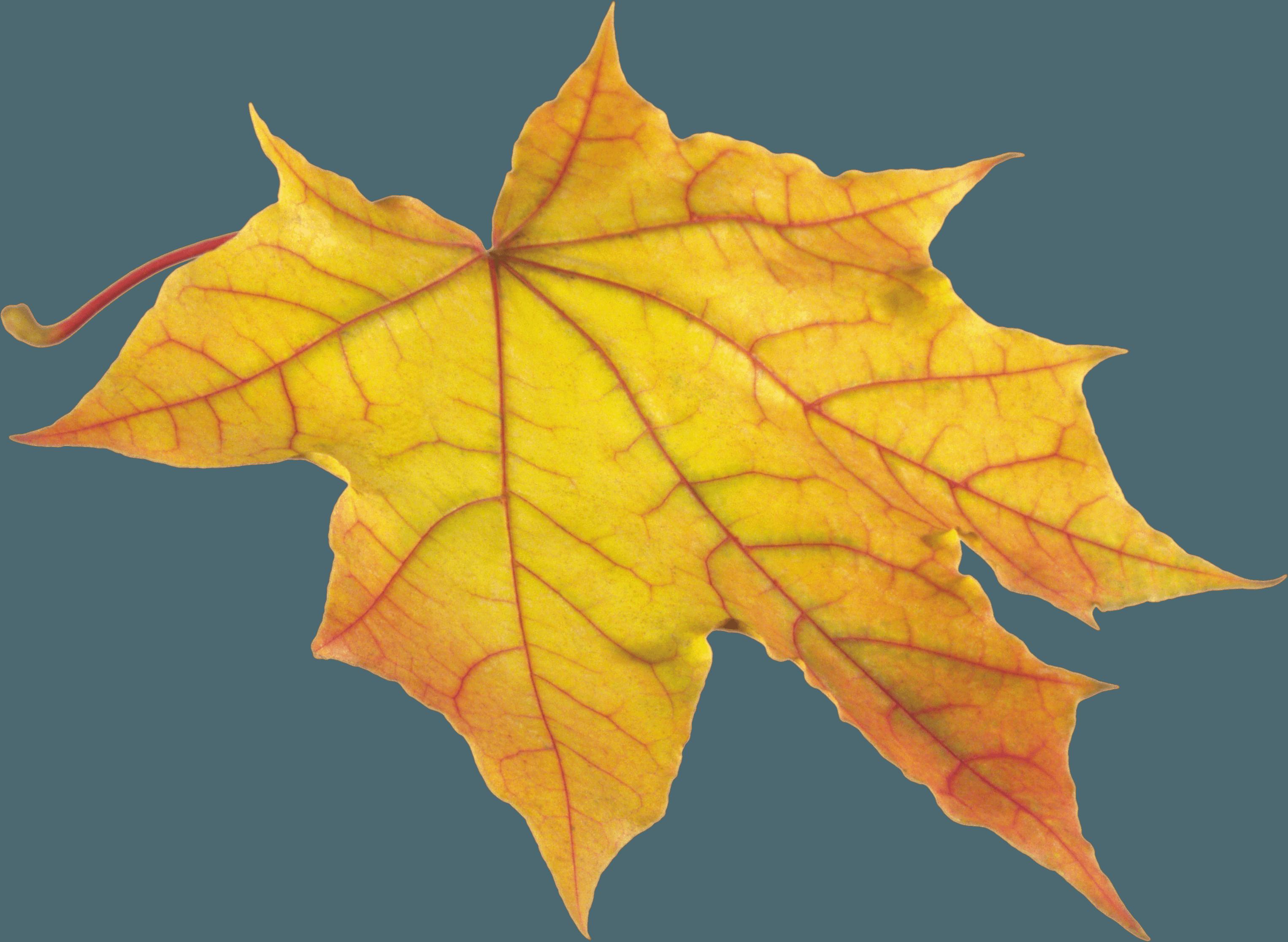 Download Yellow Autumn Png Leaf HQ PNG Image   FreePNGImg
