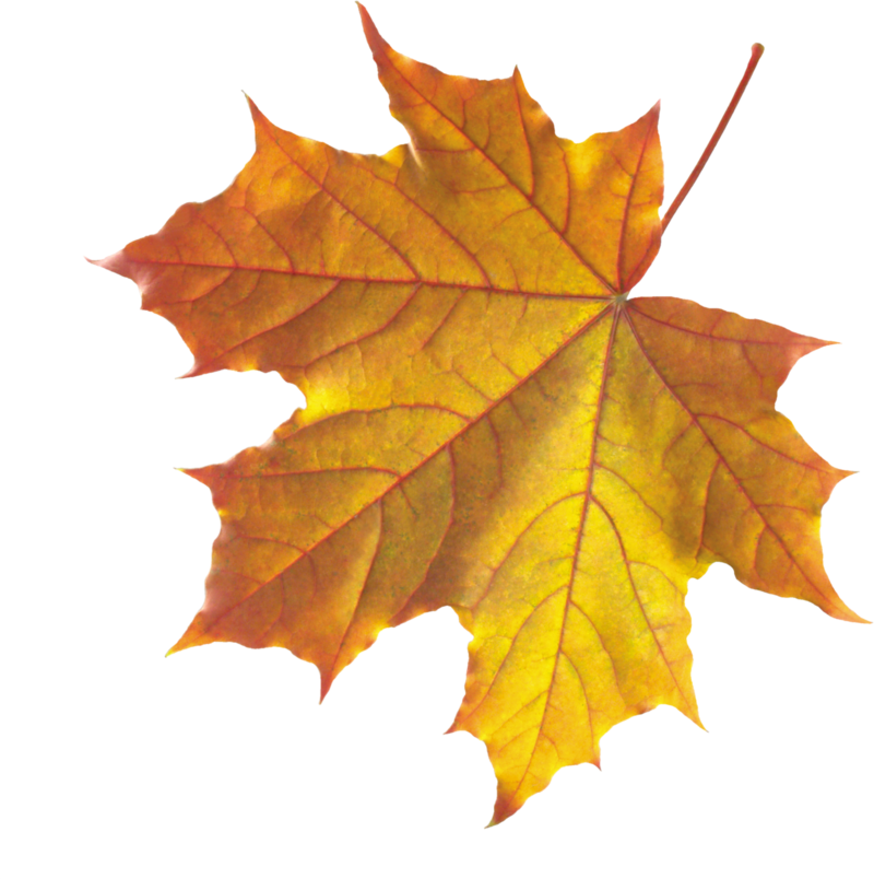 Realistic Autumn Fall Leaves PNG Image