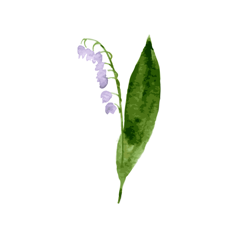 Bellflower Picture PNG Image