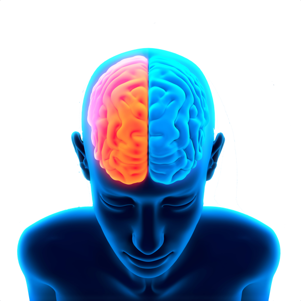 Download Brain Free Png Photo Images And Clipart Freepngimg