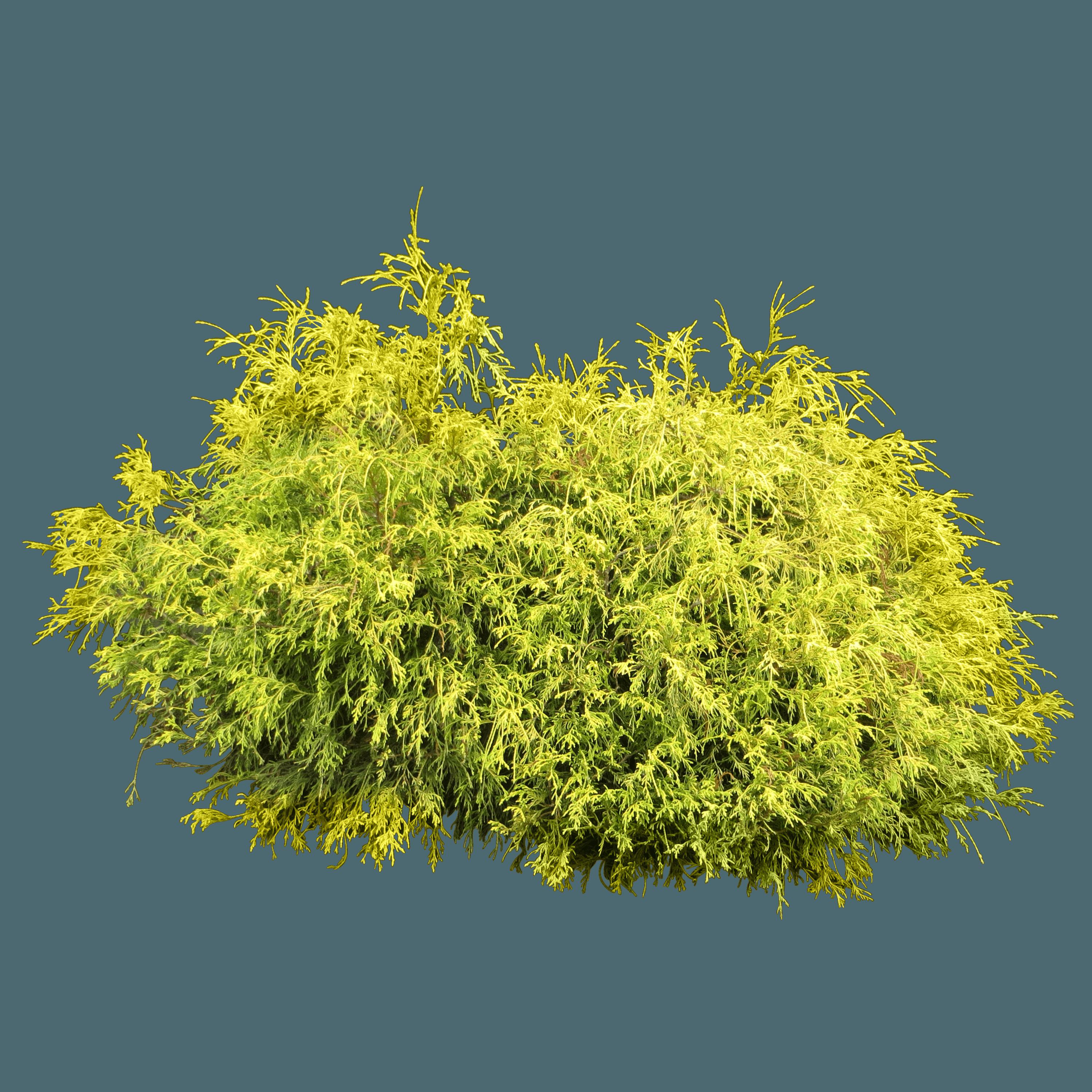 Download Bush Plant Png Image HQ PNG Image | FreePNGImg