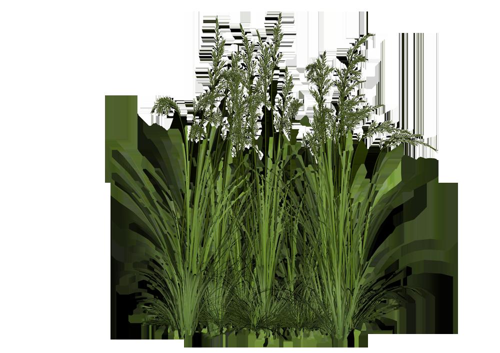 Download bushes transparent background hq png image in for Vegetacion ornamental