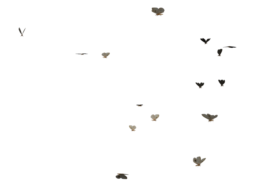 Butterflies Swarm PNG Image