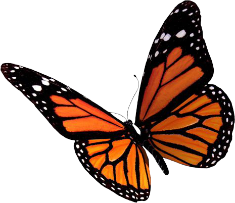 Download Flying Butterflies Clipart HQ PNG Image | FreePNGImg