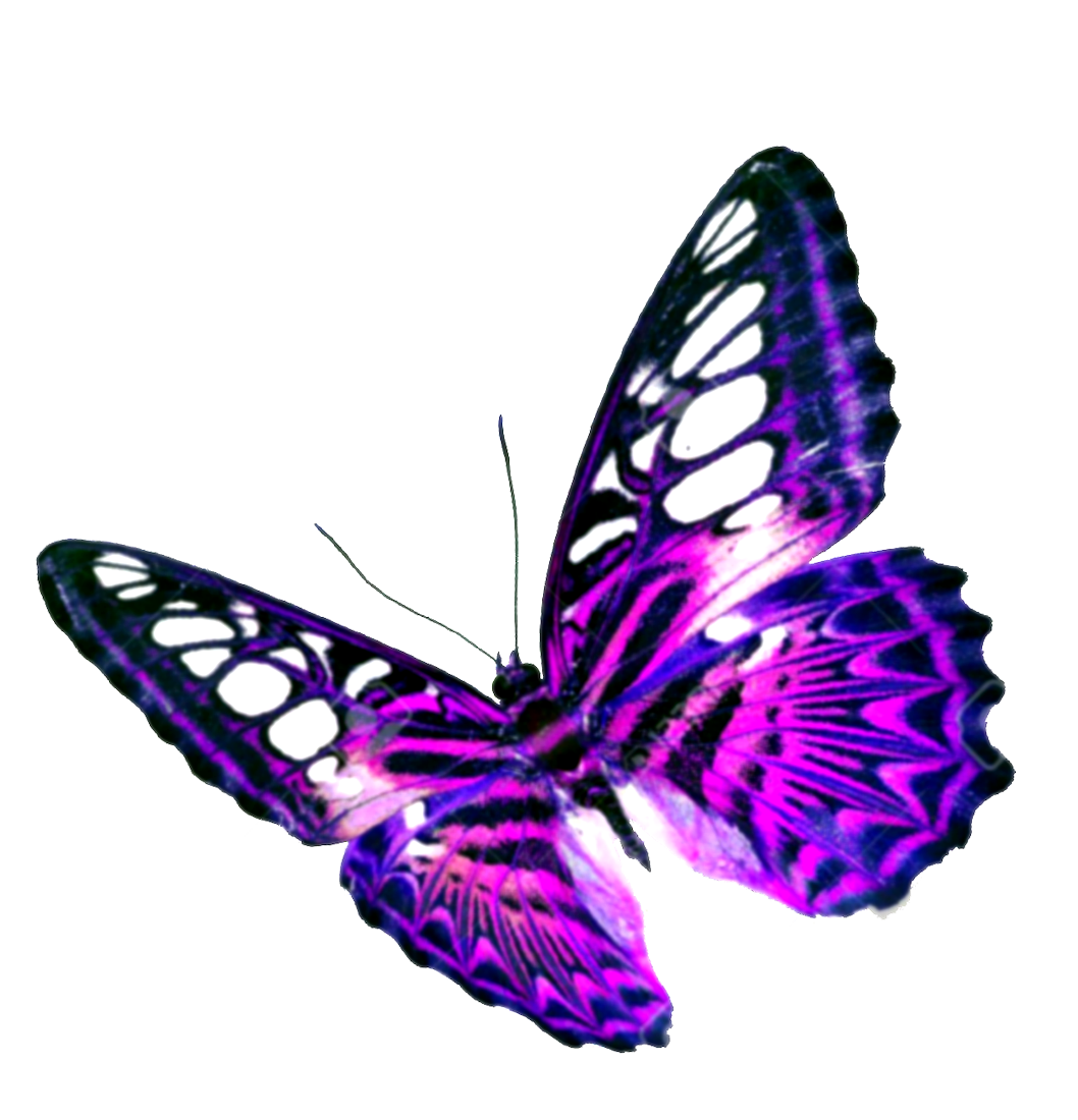 Purple Butterfly Transparent Background