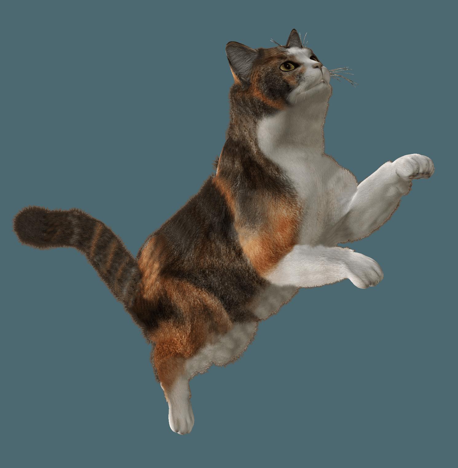Cat Yoga Meme