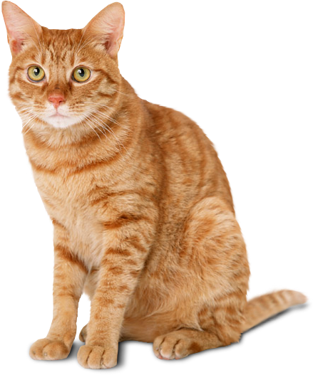 Types Of Purina Cat Food