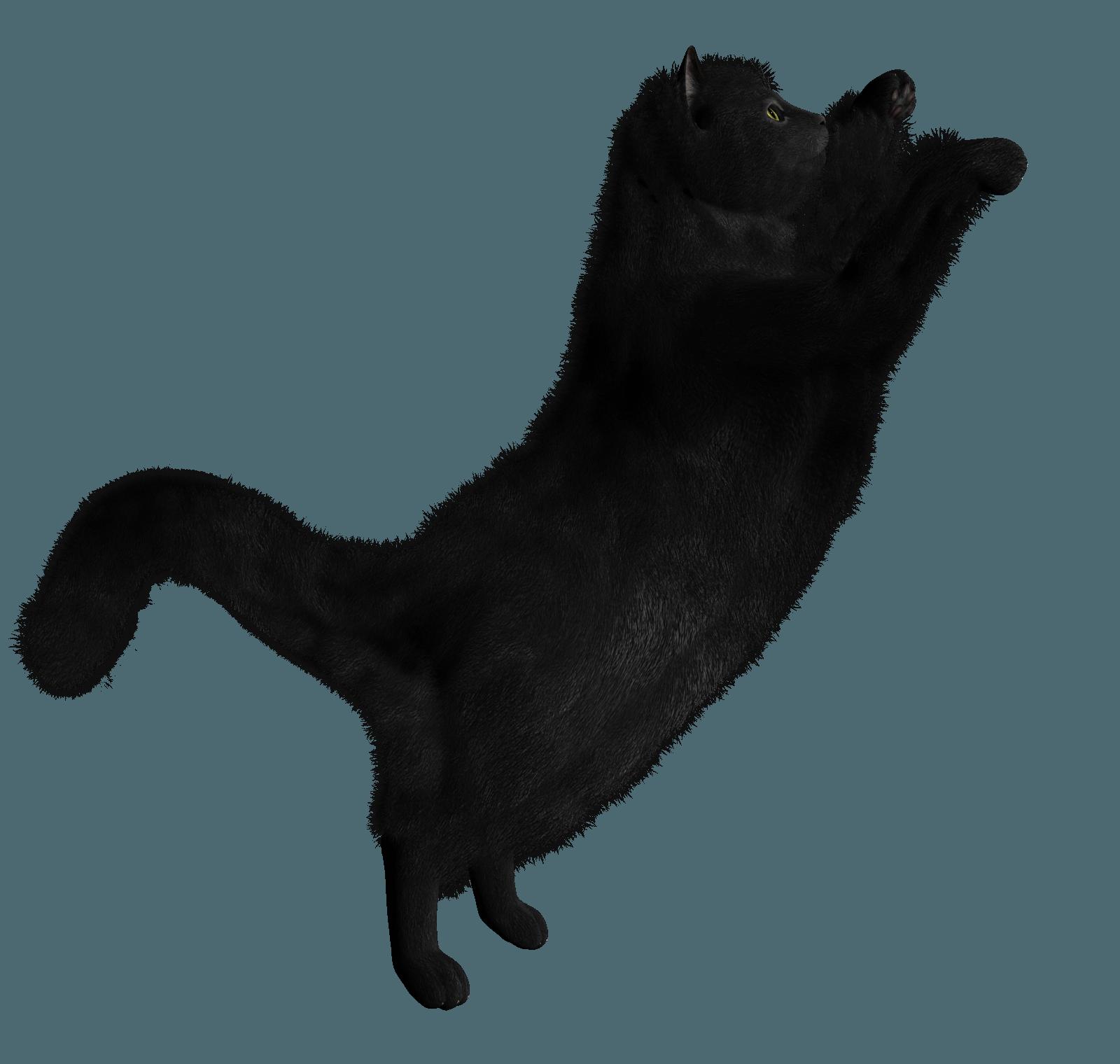 Download Black Cat Png Image HQ PNG Image | FreePNGImg