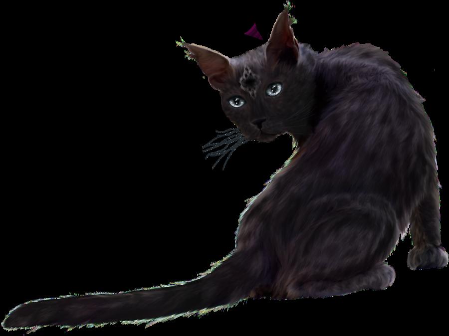 Download Black Cat Clipart HQ PNG Image | FreePNGImg