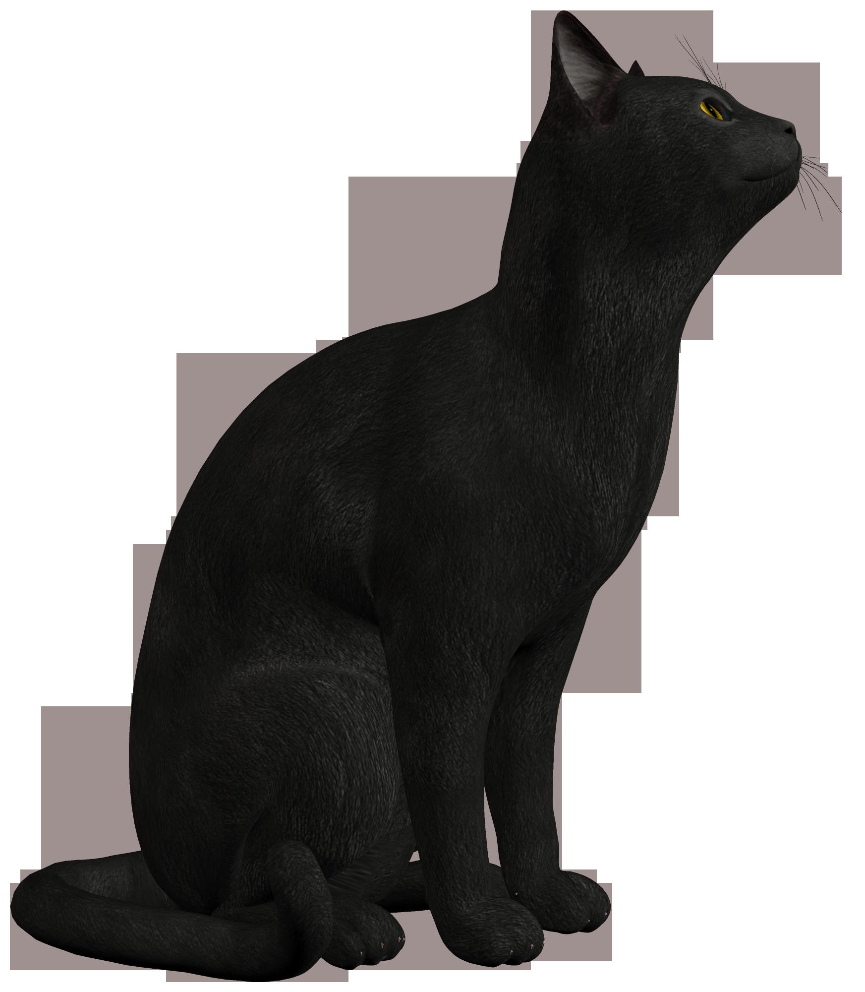Download Black Cat Photo HQ PNG Image | FreePNGImg