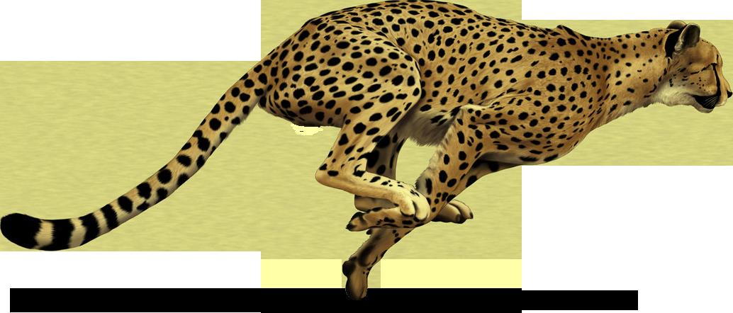 Leopard Print Dog Name Tags