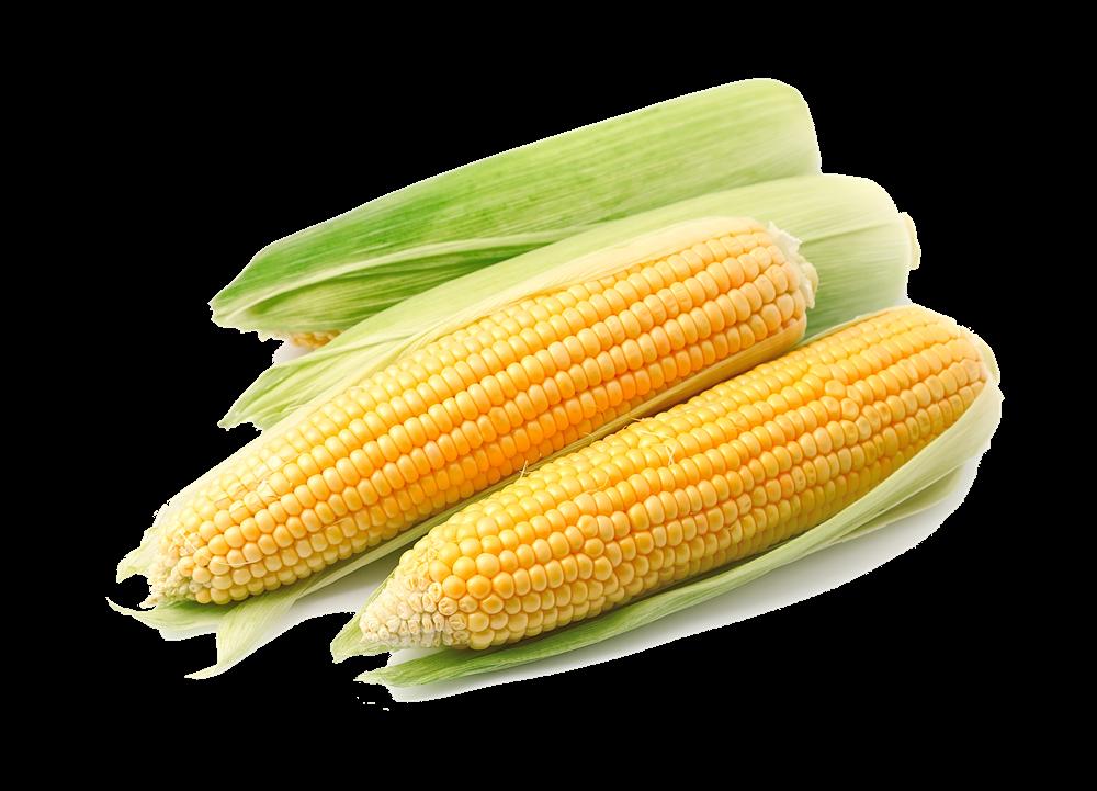 Maize Free Dog Food