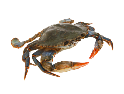 4 2 crab picture download crab picture hq png image freepngimg