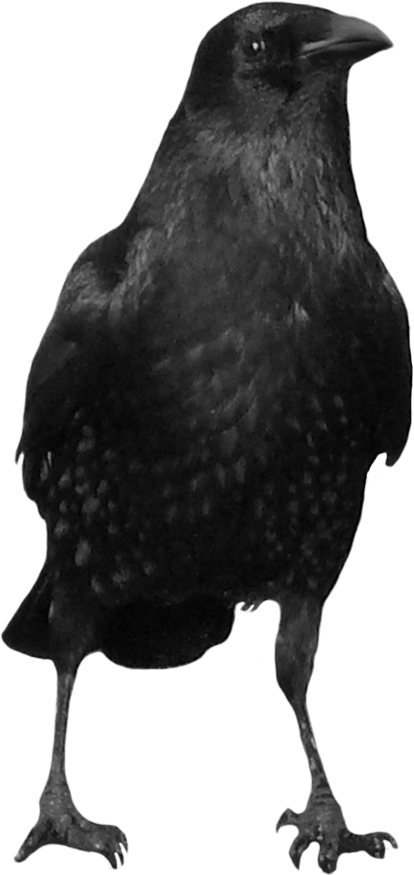 Black Crow Png Image PNG Image