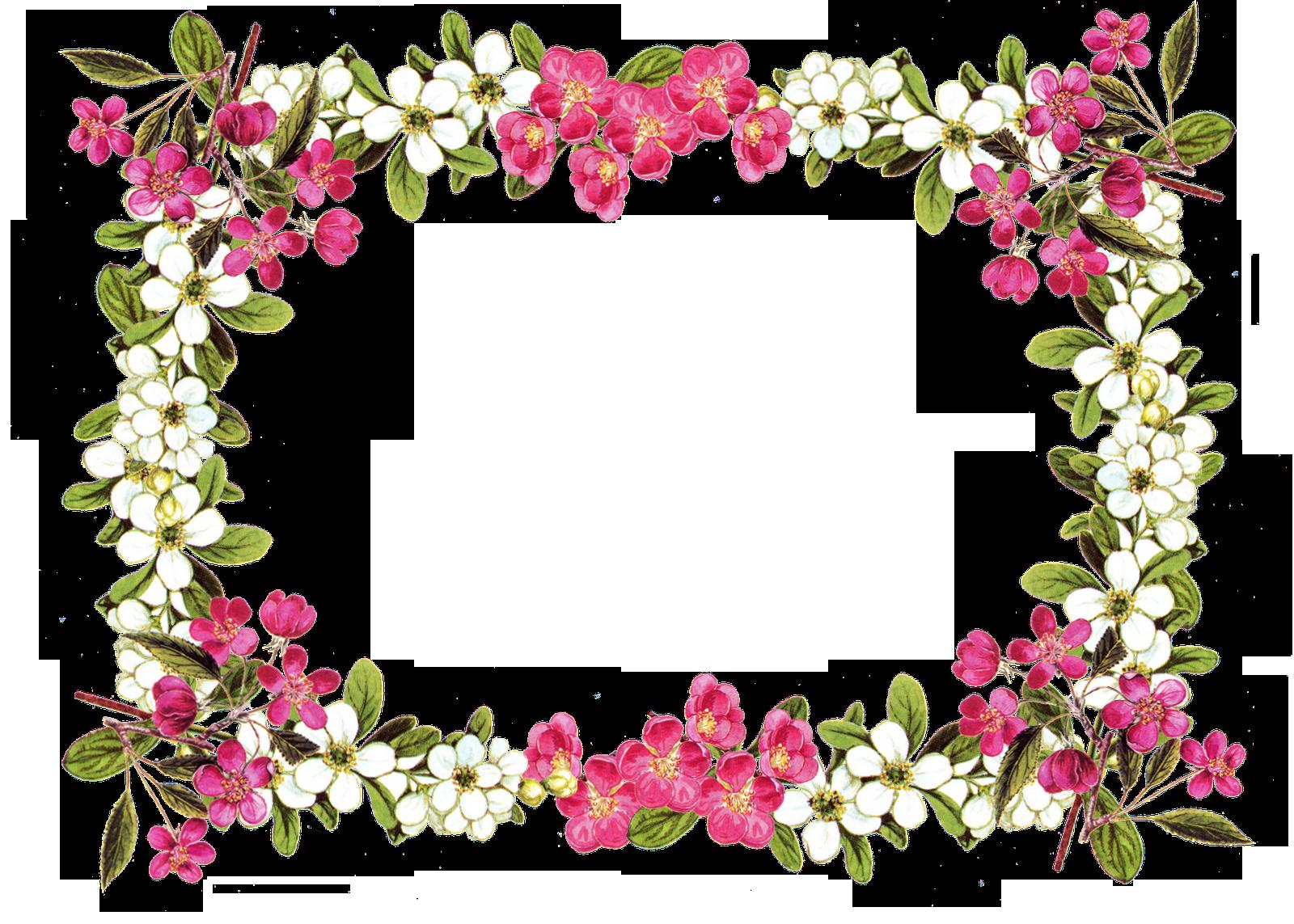 Download Floral Frame Image HQ PNG Image | FreePNGImg