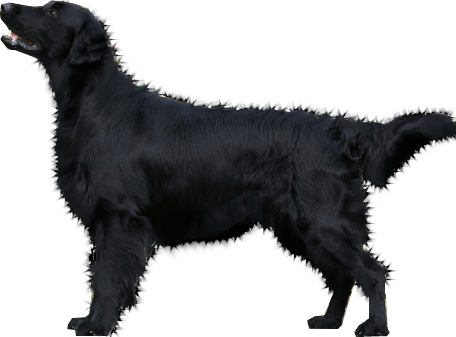 Dog Png Image Picture Download Dogs PNG Image