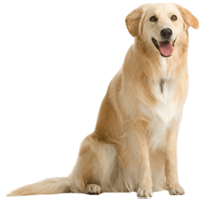 download free dog png image picture download dogs icon favicon