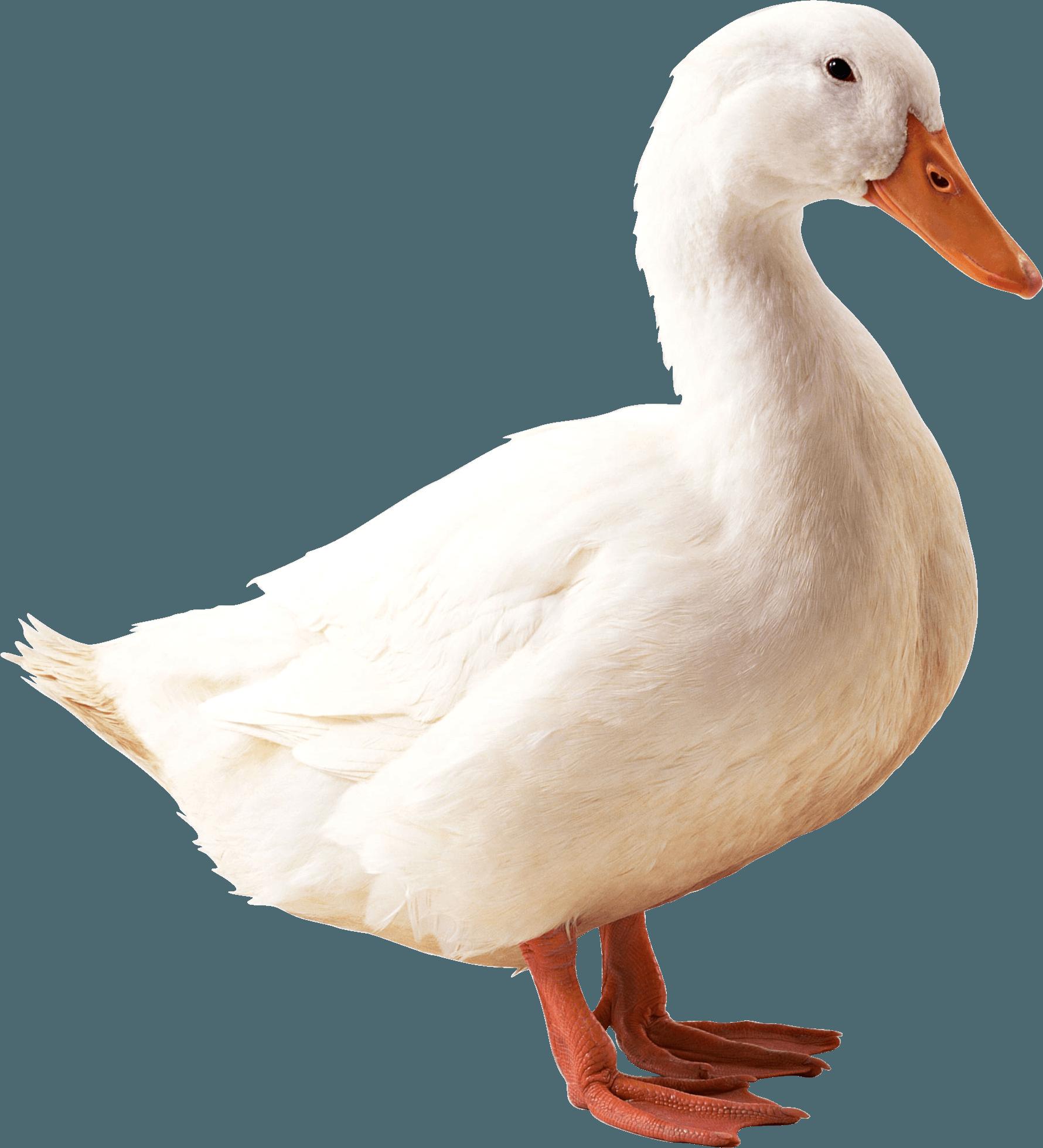 Звуки природы утка скачать бесплатно