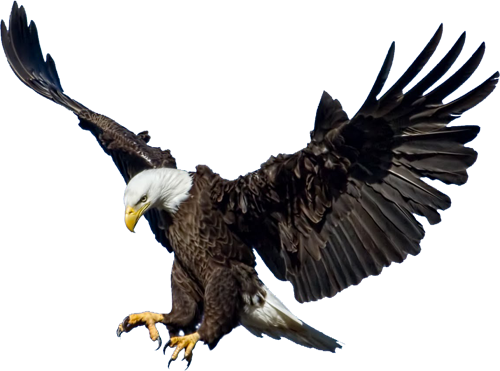 download eagle png 3 hq png image freepngimg deer head clip art black and white deer head clip art images
