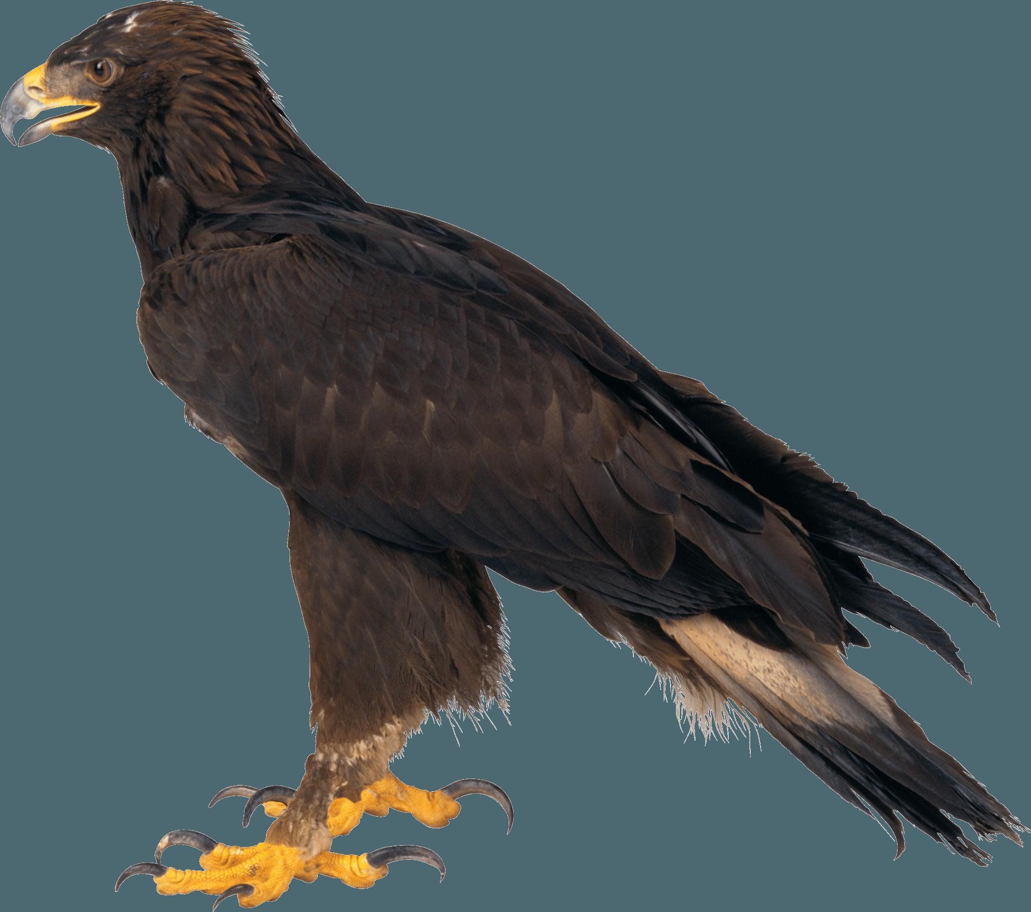 Download Eagle Png Image Download HQ PNG Image | FreePNGImg