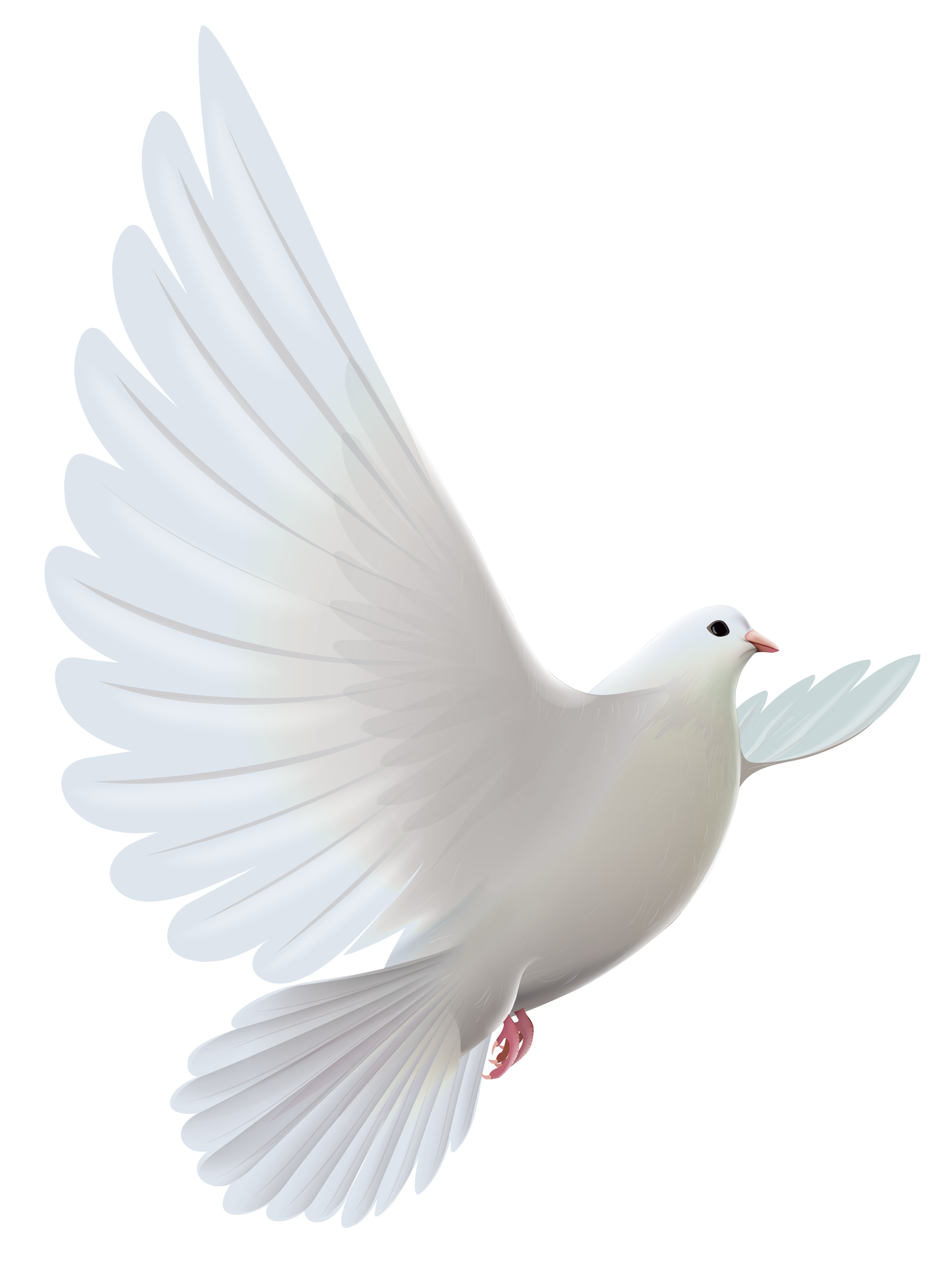 And Pigeons Transparent Prayer White Dove Bird PNG Image