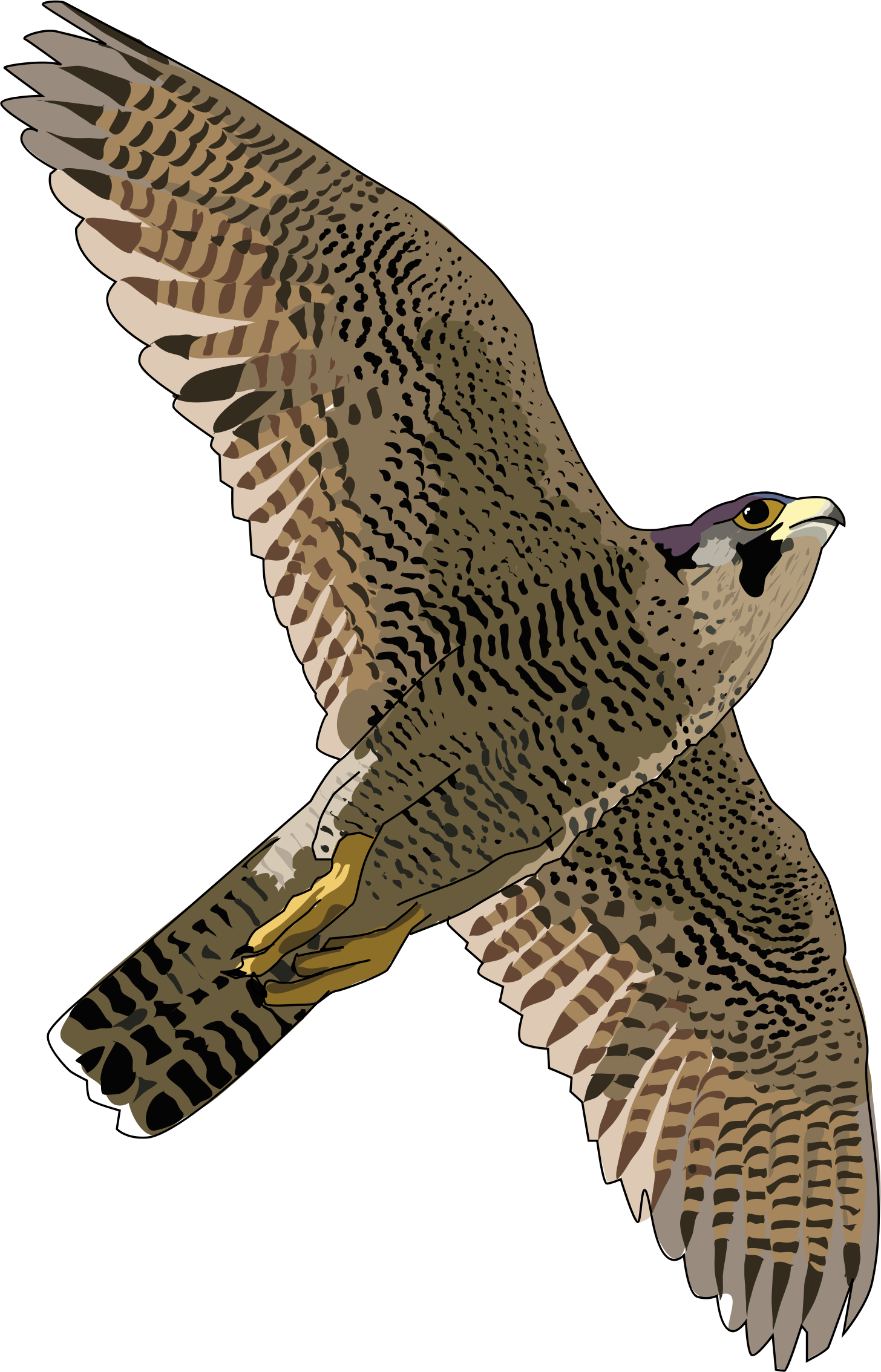 Falcon Free Download Png PNG Image