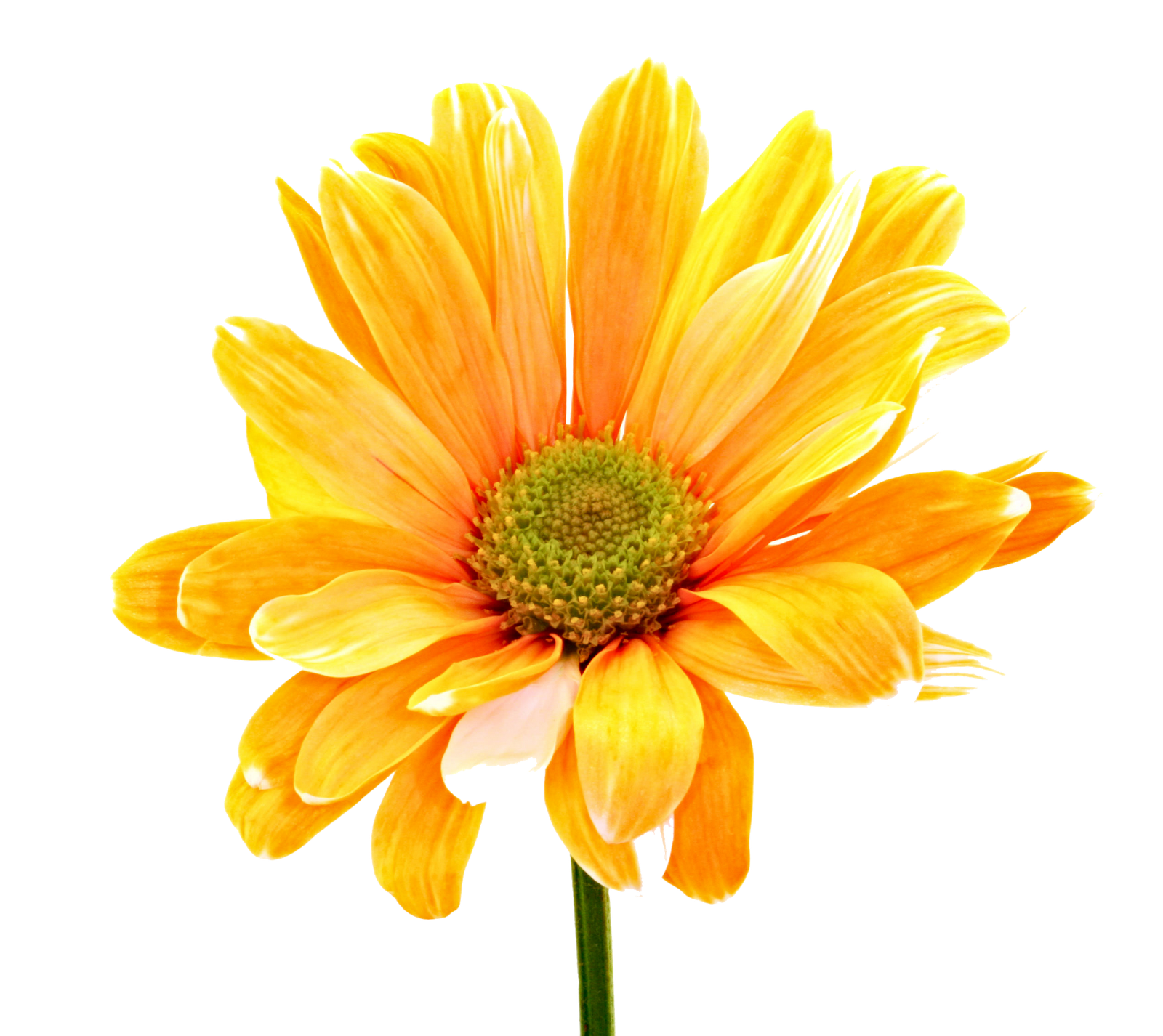 Download Colorful Flowers Photos HQ PNG Image