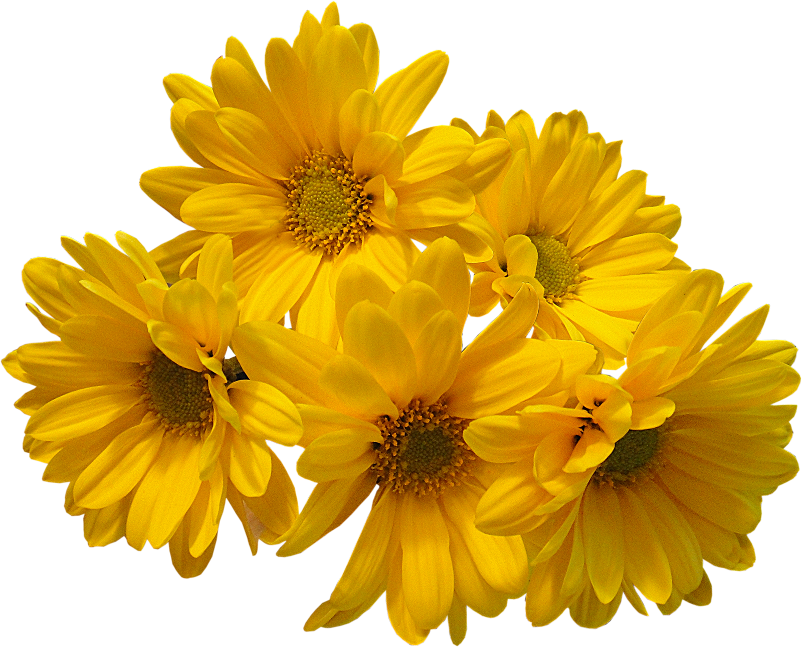 Download Free Yellow Flowers Bouquet Transparent Image Icon Favicon