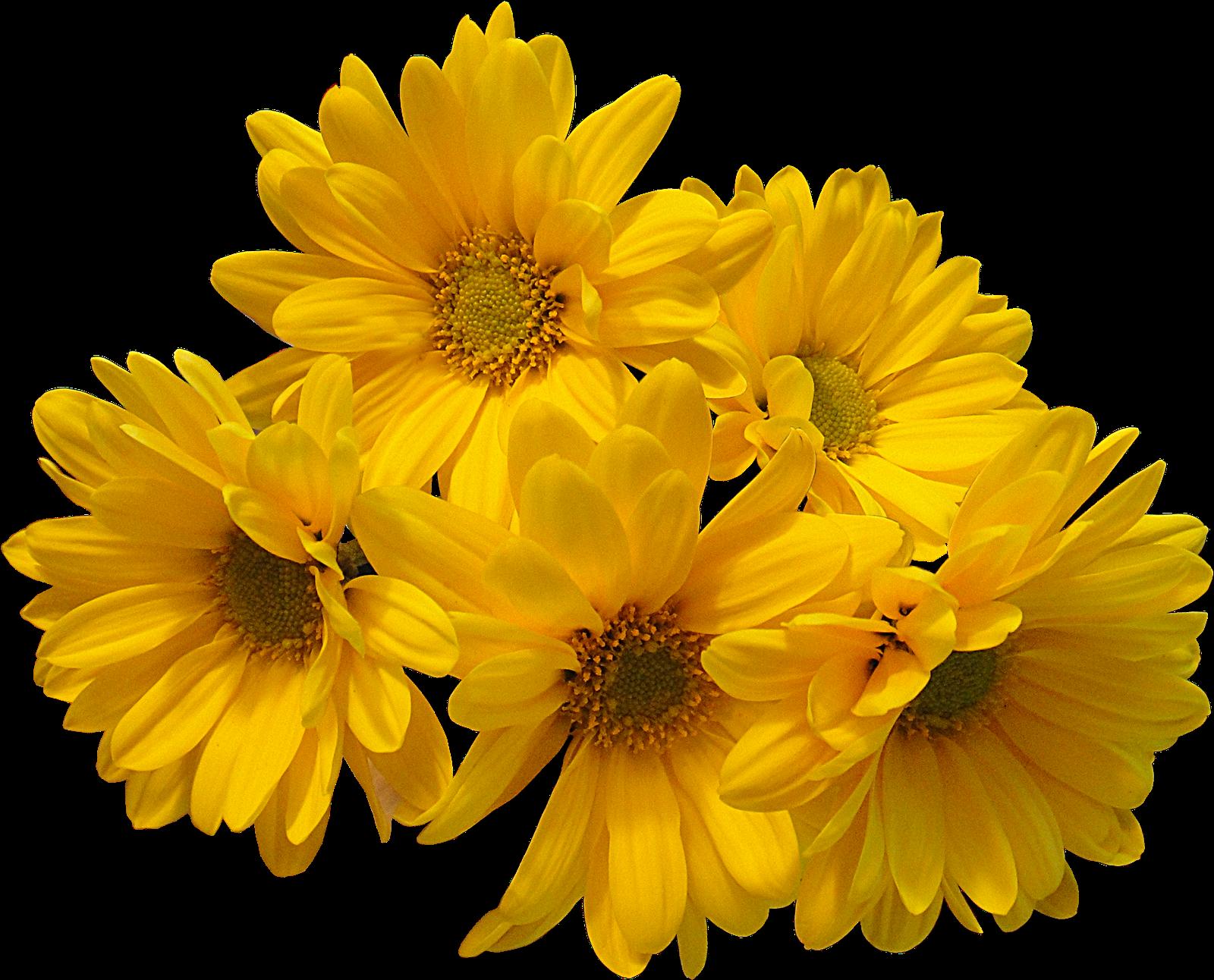 Download yellow flowers bouquet transparent image hq png image download png image yellow flowers bouquet transparent image 1700 mightylinksfo Gallery