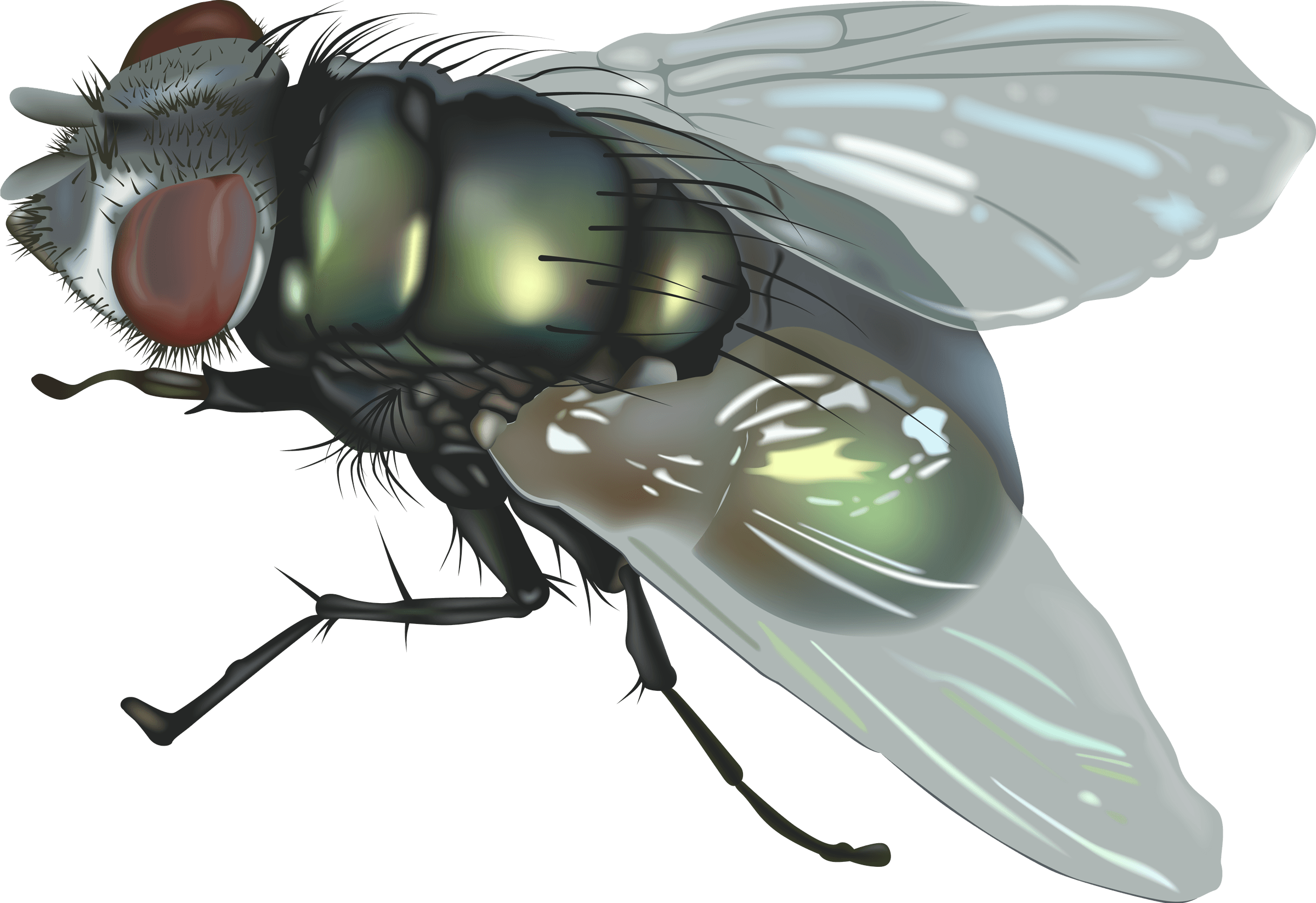 Fly Png Image PNG