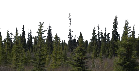 download forest hq png image freepngimg eagle clipart mascot bald eagle clipart