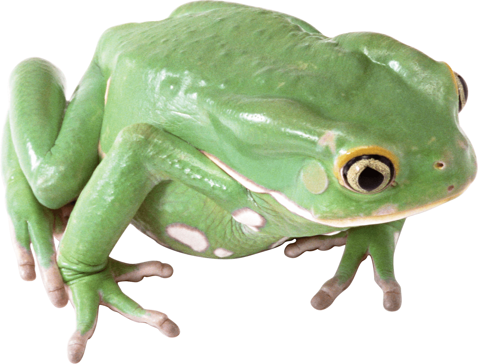 download frog free png photo images and clipart freepngimg
