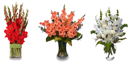 Gladiolus Clipart PNG Image