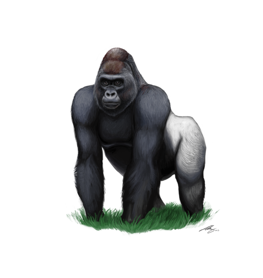 download gorilla clipart hq png image freepngimg cheetah clip art stencil cheetah clip art free