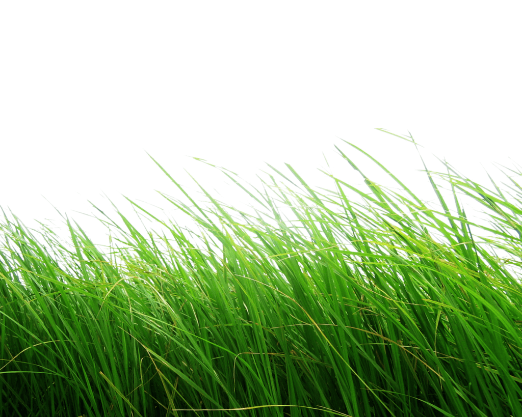 Download Grass Png Image Green Grass Png Picture Hq Png