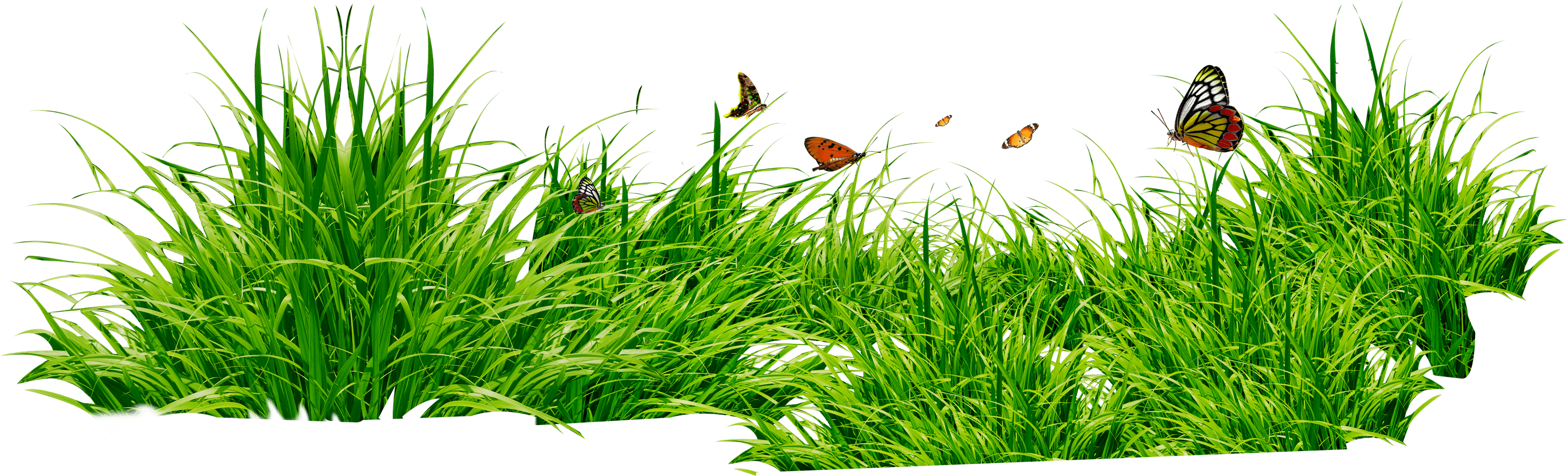 Download Grass Png Image Green Picture HQ PNG