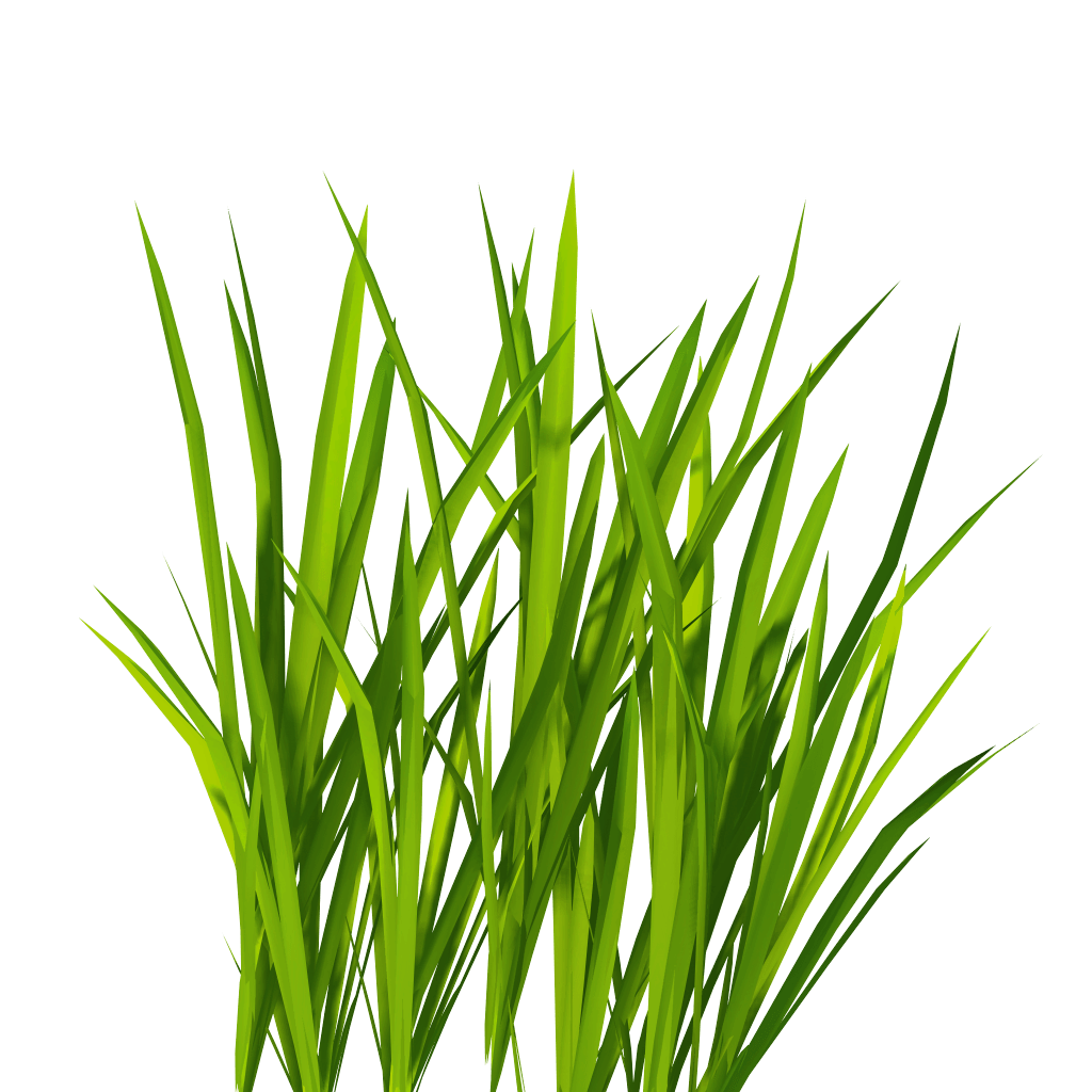 download grass free png photo images and clipart | freepngimg