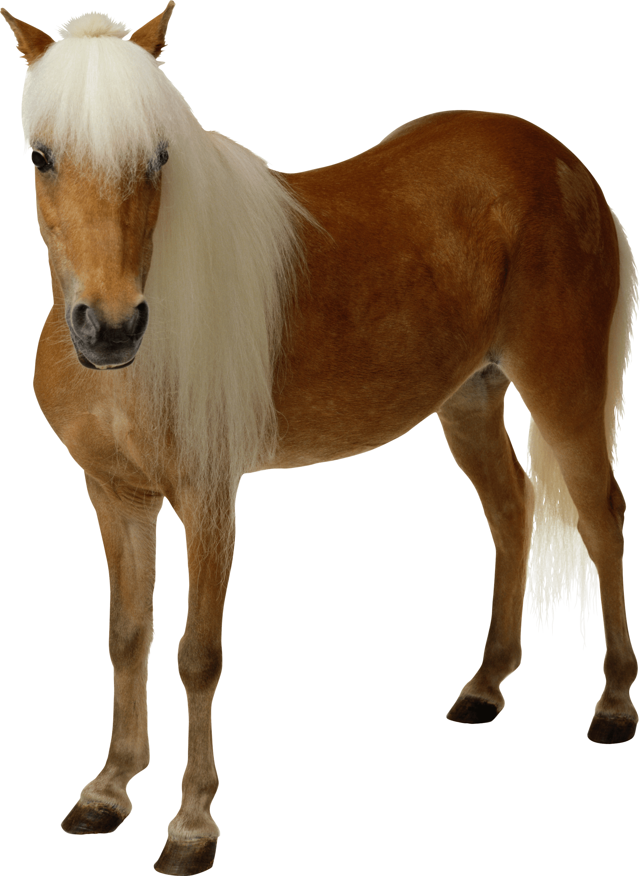 download clipart brown horse png image download picture mustache clip art free download mustache clip art printables