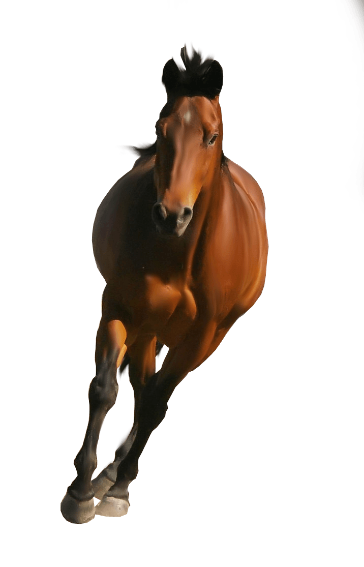 Clipart Brown Horse Png Image Download Picture Transparent Background PNG Image