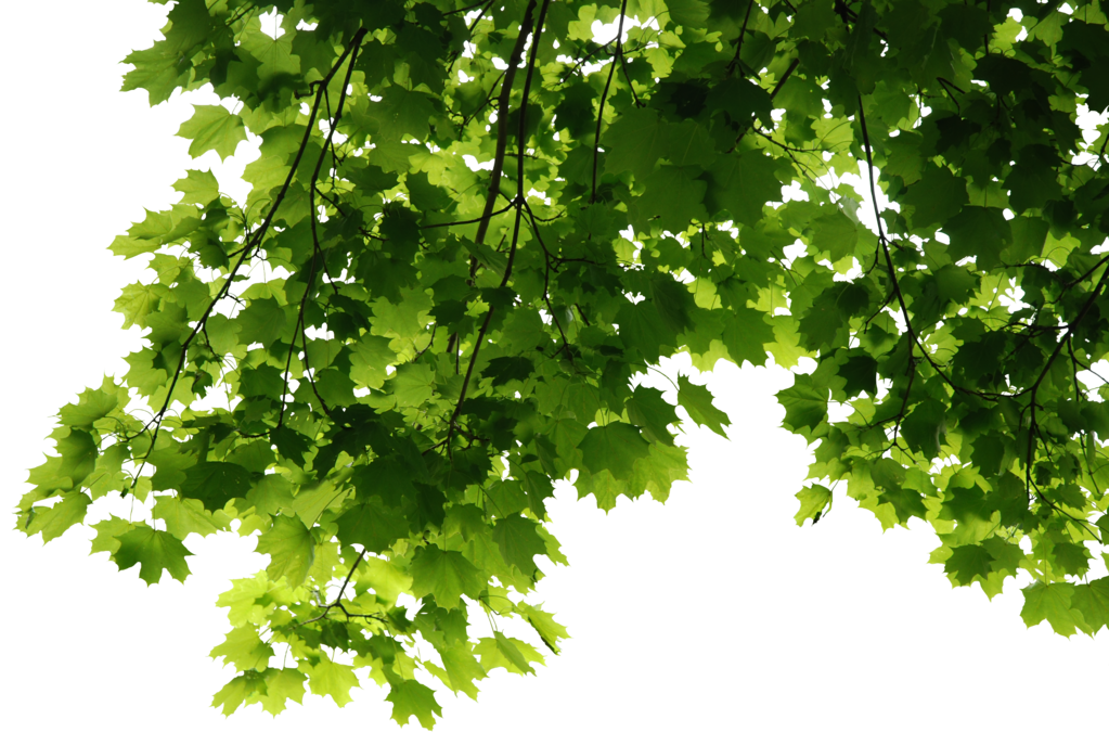 Download Leaves Png File HQ PNG Image