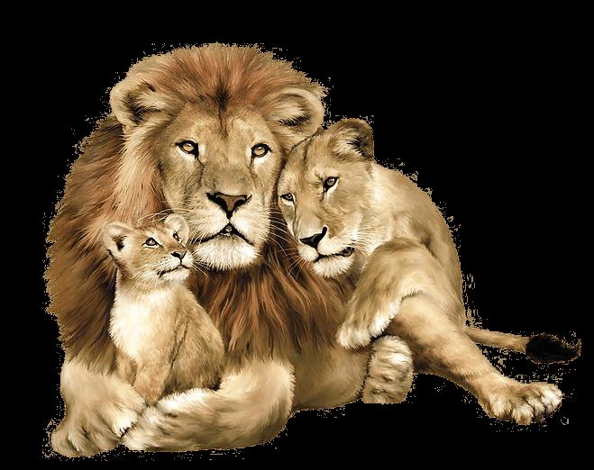 Download Lion Png Image Image Download Picture Lions HQ