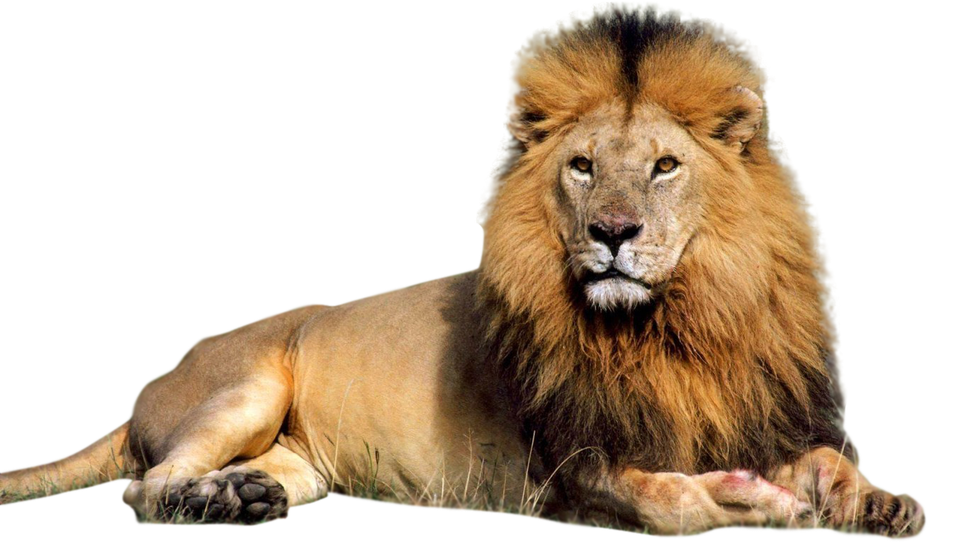 download lion free png photo images and clipart freepngimg