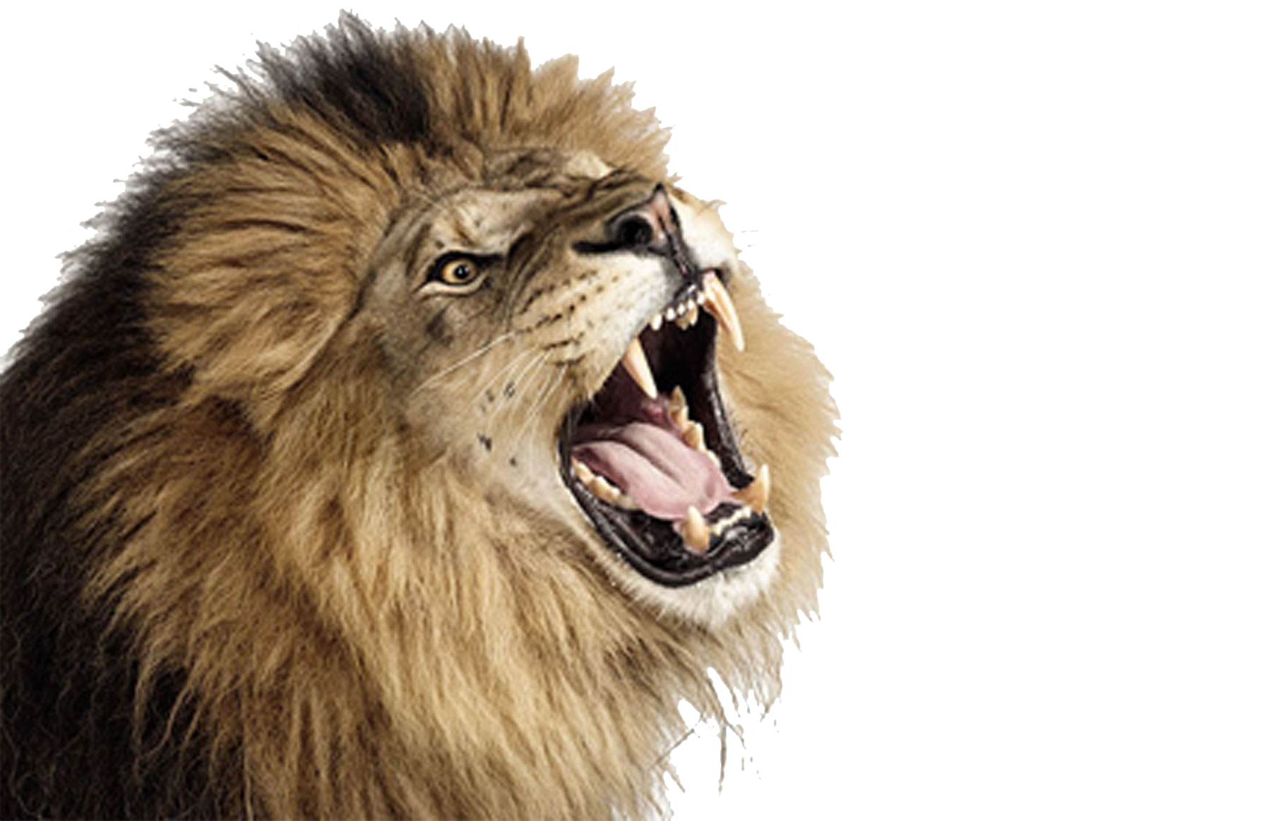 Roaring Lion Photos PNG Image