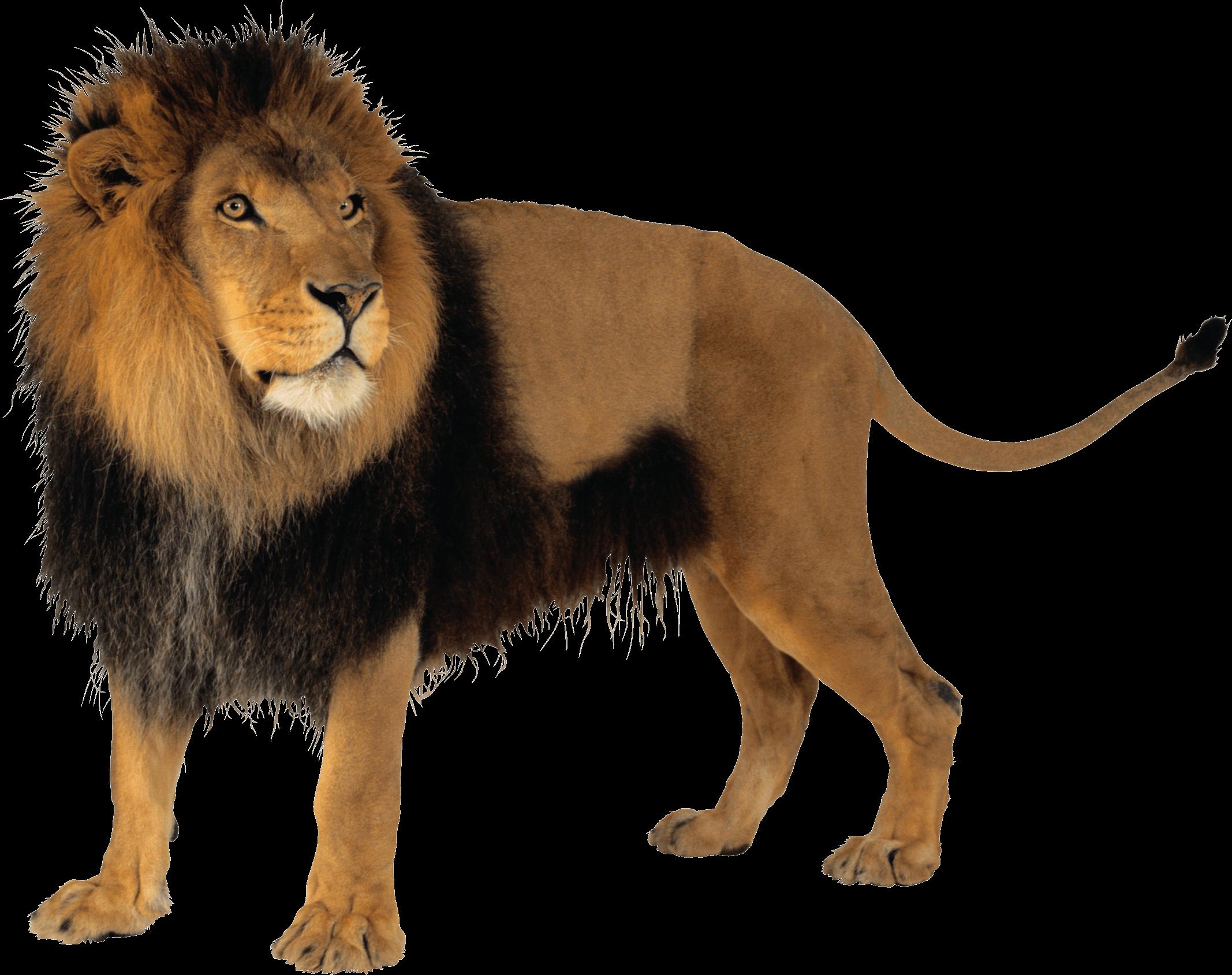 Lion Png Images Download: Download Lion Png Image HQ PNG Image