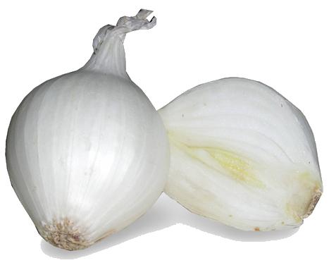 download white onion image hq png image freepngimg