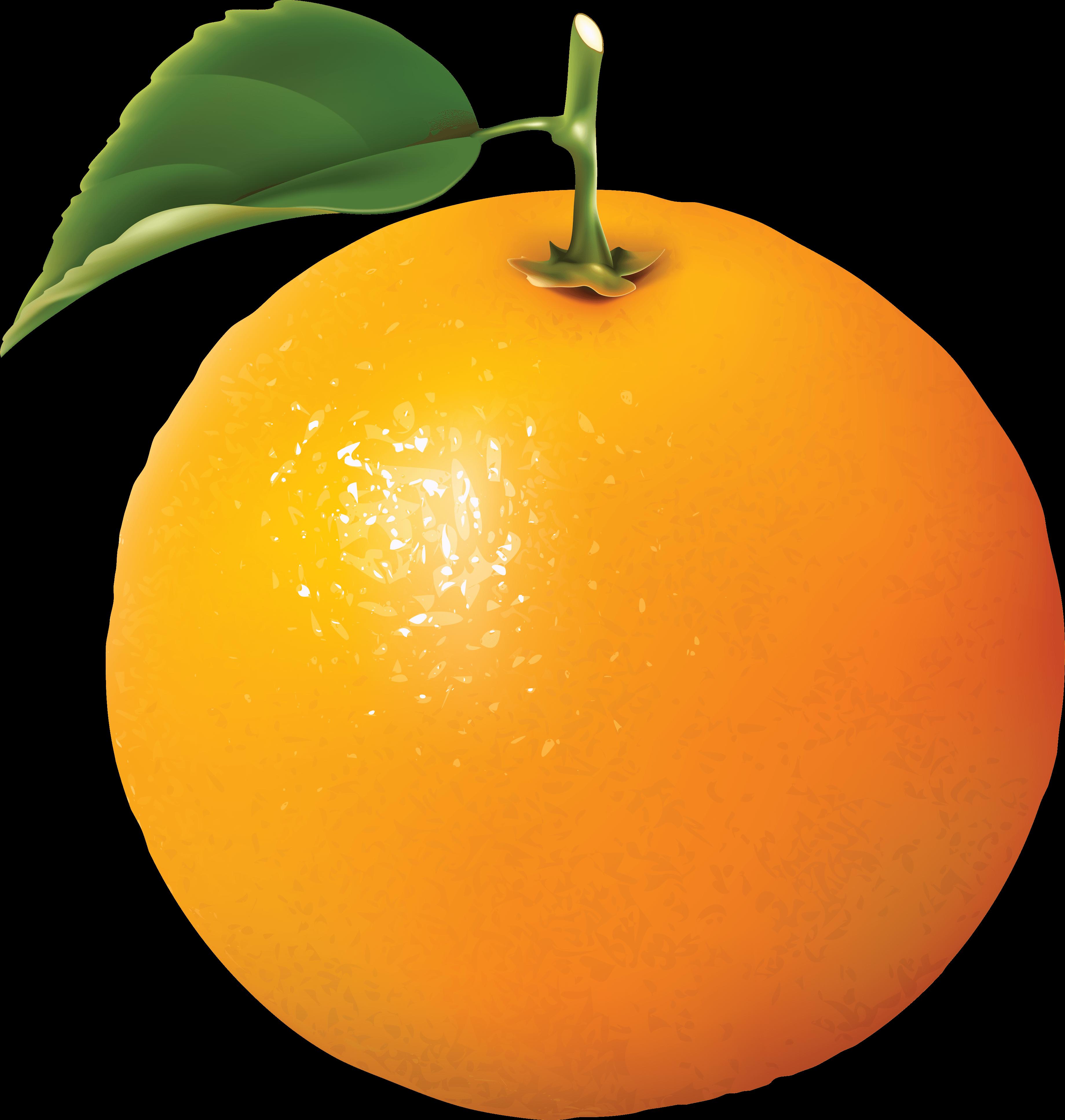 Give Dogs Orange Juice